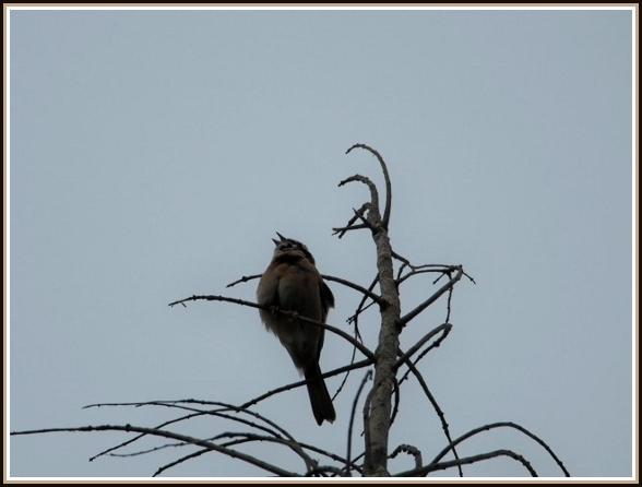 初めての小鳥さん_c0228386_1124088.jpg