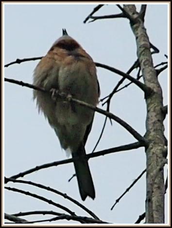初めての小鳥さん_c0228386_112497.jpg