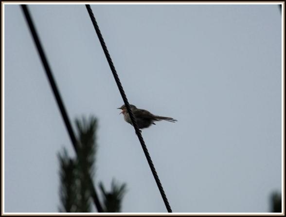 初めての小鳥さん_c0228386_1133284.jpg