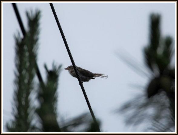 初めての小鳥さん_c0228386_1134130.jpg