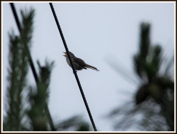 初めての小鳥さん_c0228386_1135047.jpg