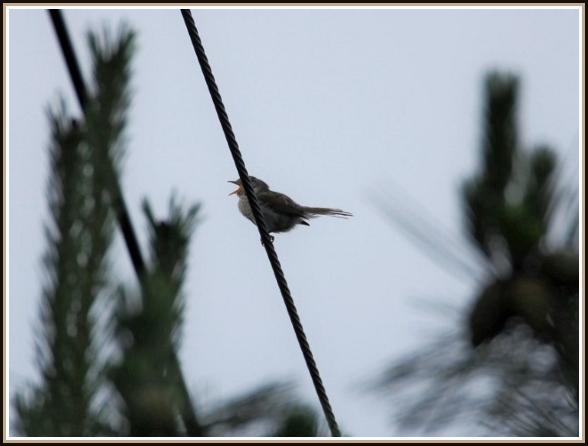 初めての小鳥さん_c0228386_1135943.jpg