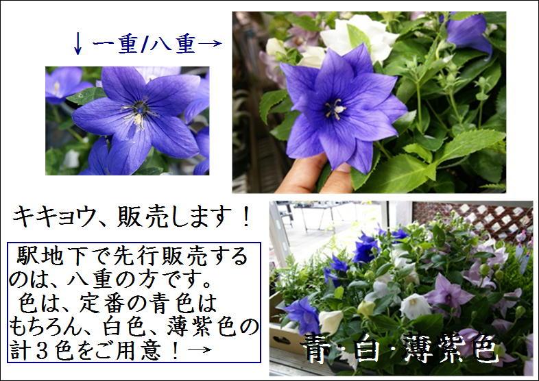 f0203094_14212721.jpg