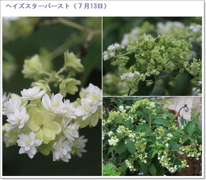 c0325701_18464509.jpg