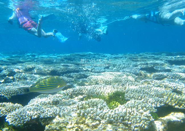 子どもと一緒に南の島へ!シュノーケリングでサンゴやウミガメにも出会える旅!