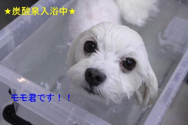 b0130018_0532766.jpg