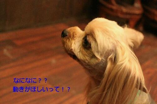 b0130018_23253236.jpg
