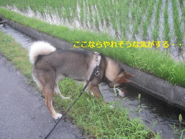 f0143123_21443799.jpg