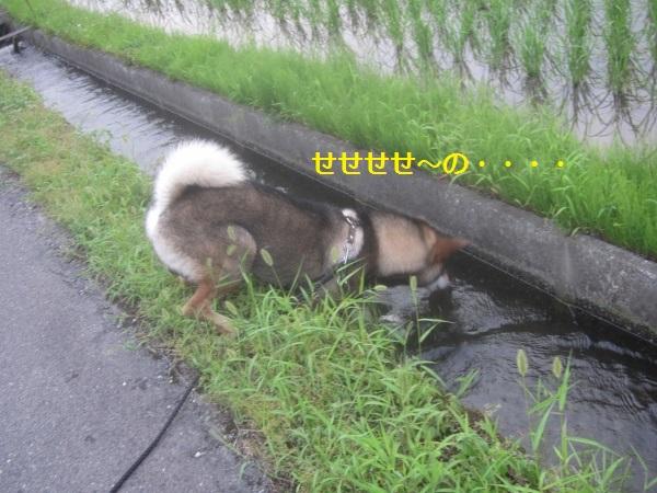 f0143123_21464870.jpg