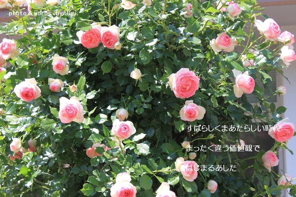 f0351844_15533167.jpg