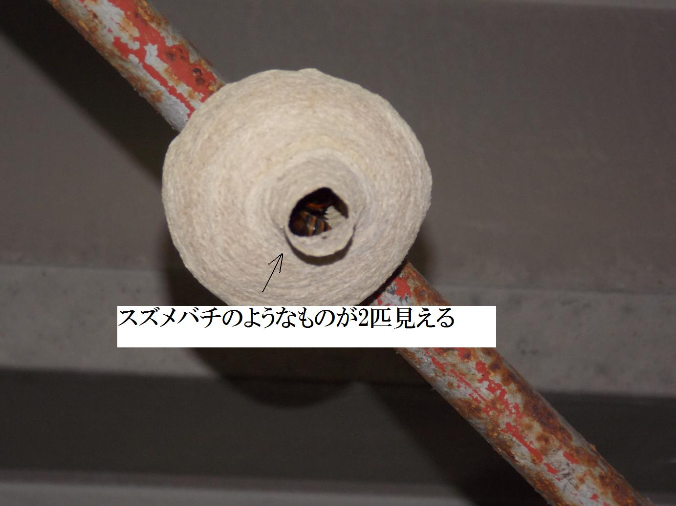 b0193252_22253830.jpg