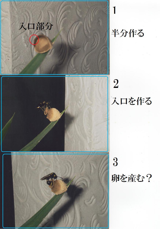 b0193252_2231715.jpg