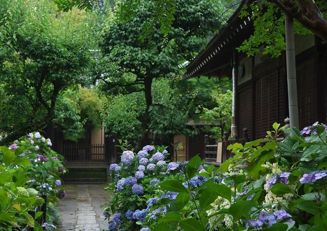 梅雨の本土寺_f0018464_2153421.jpg