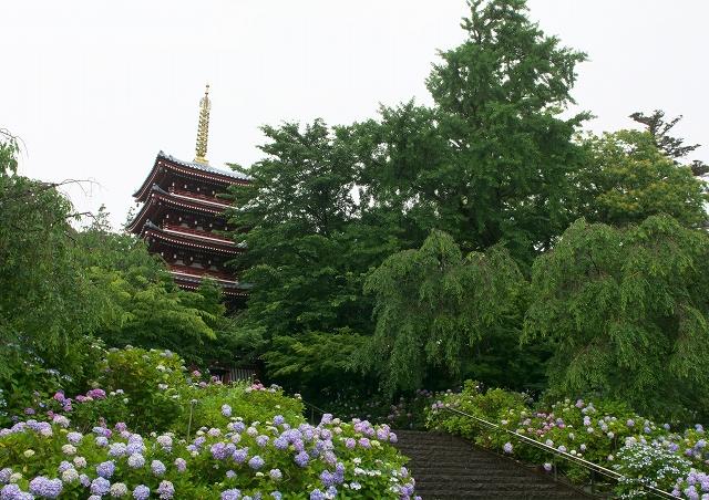 梅雨の本土寺_f0018464_21535360.jpg