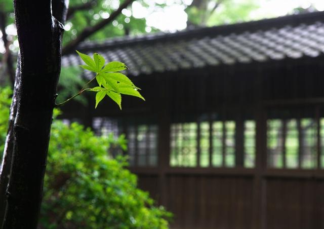 梅雨の本土寺_f0018464_21541368.jpg