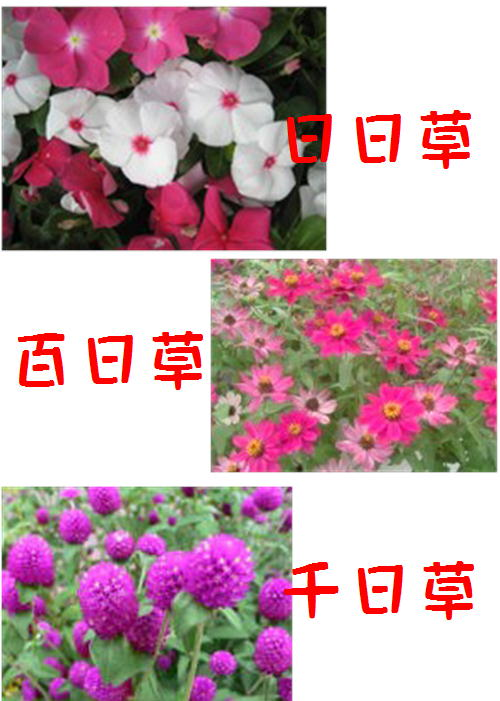 f0003174_1330853.jpg