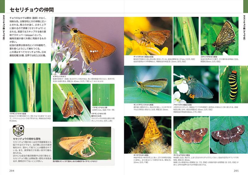 「昆虫博士入門」と自然観察大学の関係_d0163696_1813022.jpg