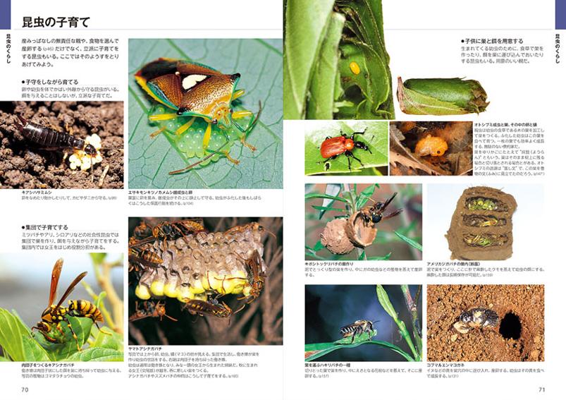 「昆虫博士入門」と自然観察大学の関係_d0163696_1818588.jpg