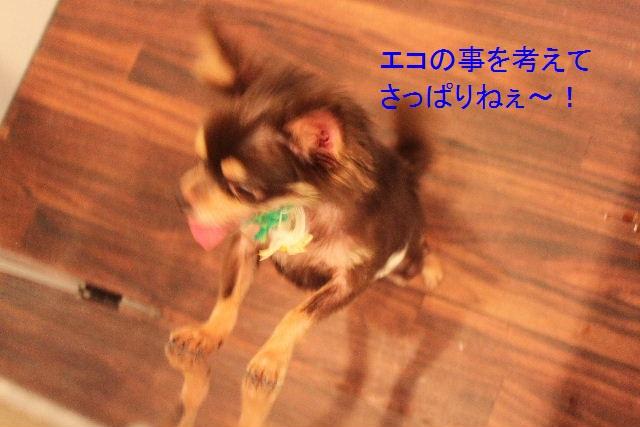 b0130018_2323727.jpg