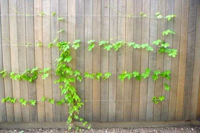 植物も「訓練」するの!?_e0114020_18345724.jpg