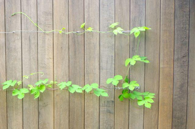 植物も「訓練」するの!?_e0114020_1835997.jpg