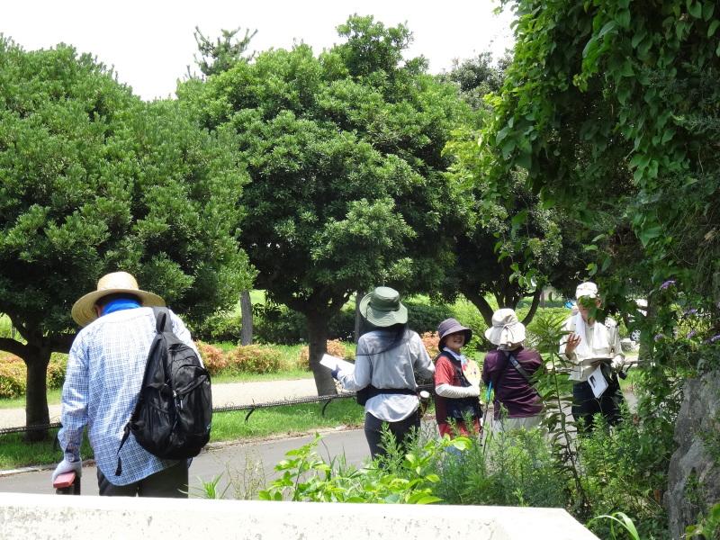 トンボソウとコクランに出会えました in うみべの森を育てる会植物観察     by     (TATE-misaki)_c0108460_17273934.jpg