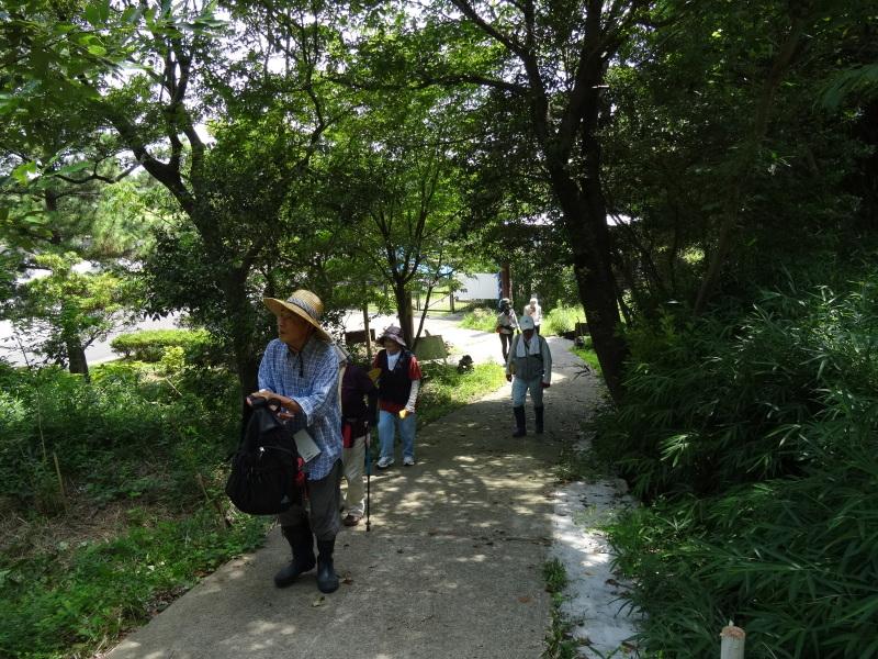トンボソウとコクランに出会えました in うみべの森を育てる会植物観察     by     (TATE-misaki)_c0108460_17274117.jpg