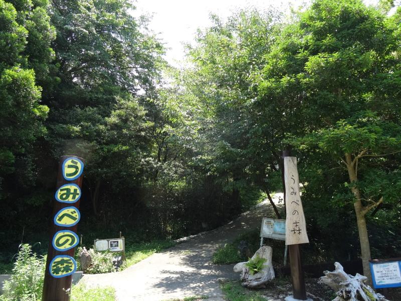 トンボソウとコクランに出会えました in うみべの森を育てる会植物観察     by     (TATE-misaki)_c0108460_17274132.jpg