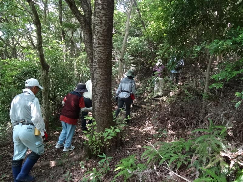 トンボソウとコクランに出会えました in うみべの森を育てる会植物観察     by     (TATE-misaki)_c0108460_17274294.jpg