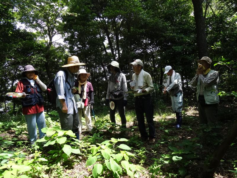トンボソウとコクランに出会えました in うみべの森を育てる会植物観察     by     (TATE-misaki)_c0108460_17274312.jpg