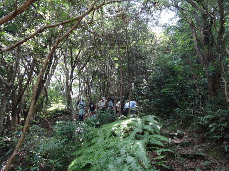 トンボソウとコクランに出会えました in うみべの森を育てる会植物観察     by     (TATE-misaki)_c0108460_17274439.jpg