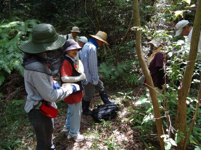 トンボソウとコクランに出会えました in うみべの森を育てる会植物観察     by     (TATE-misaki)_c0108460_17274504.jpg