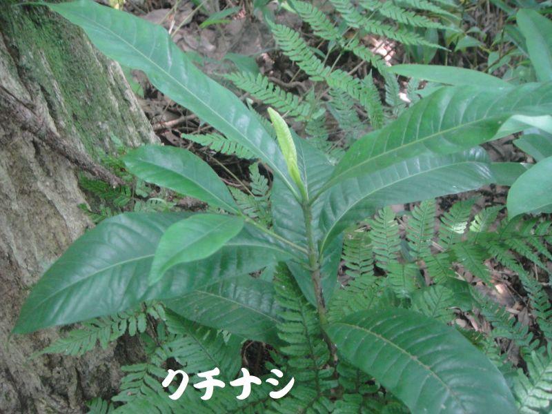 トンボソウとコクランに出会えました in うみべの森を育てる会植物観察     by     (TATE-misaki)_c0108460_17353860.jpg