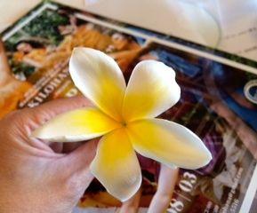 ハワイ語_f0204368_23511028.jpg