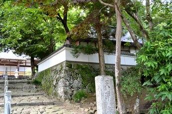 小椎の原生林で姫春蝉の合唱を聞く_b0102572_23442138.jpg