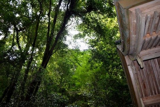 小椎の原生林で姫春蝉の合唱を聞く_b0102572_2344588.jpg
