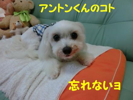 b0193480_15442312.jpg