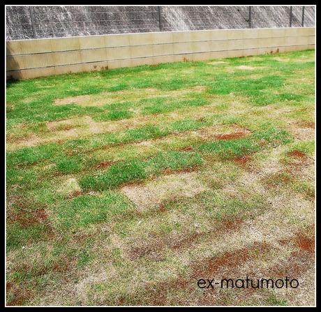 芝生の話_d0251580_16482125.jpg