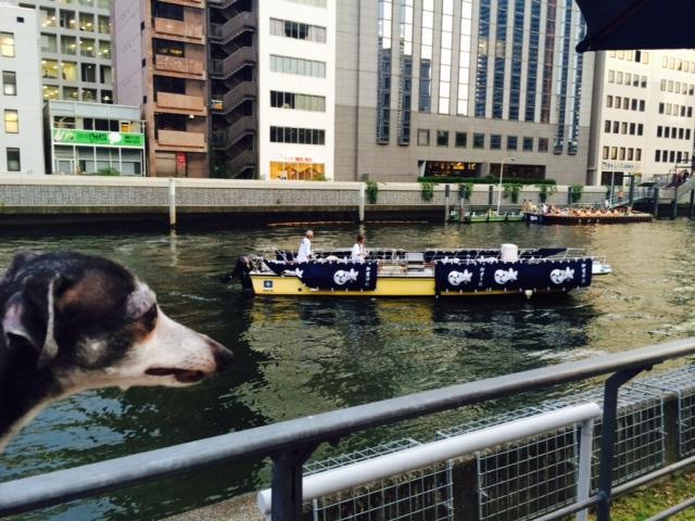 大阪の夏が始まります。_a0050302_3173740.jpg