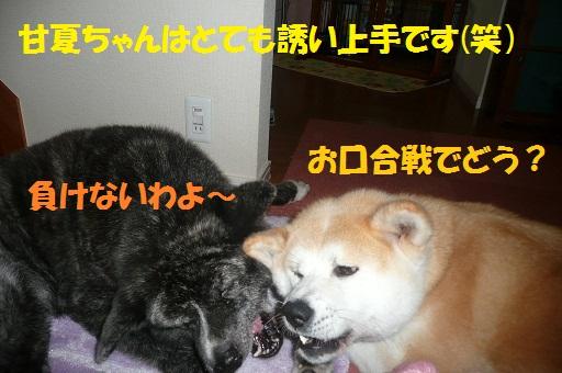f0121712_16395926.jpg