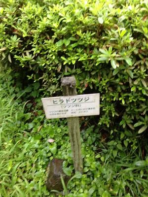 2014 鹿央里やま 蓮まつり_b0228113_11000571.jpg