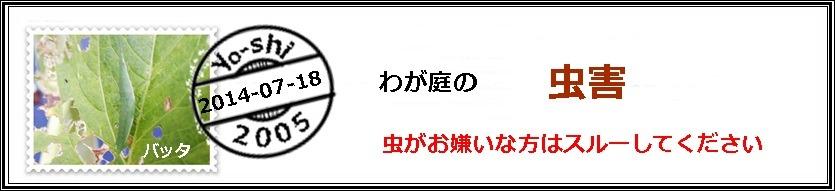 e0033229_19562183.jpg