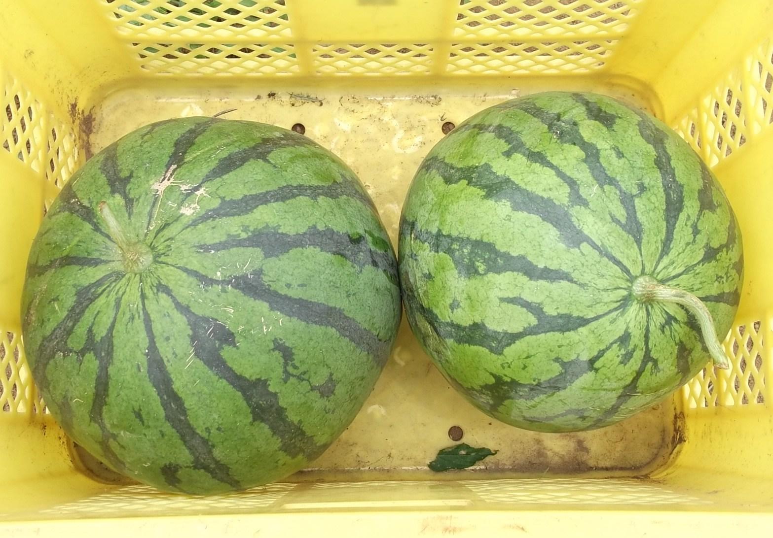 野菜のついでに...COSTCOに!_b0137932_21324588.jpg