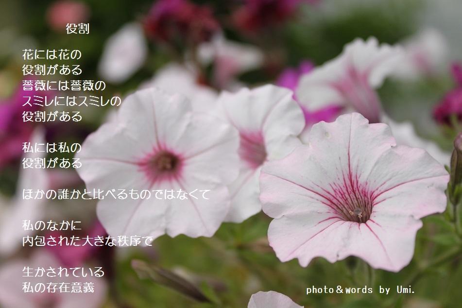 f0351844_10595295.jpg