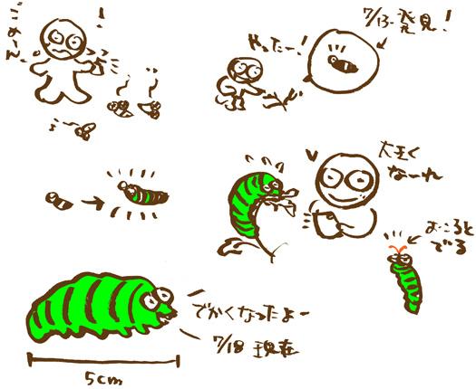 キアゲハの幼虫、きーちゃん_e0026053_13282725.jpg
