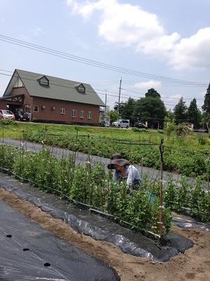夏野菜、出始めましたよ~_a0062869_14371227.jpg