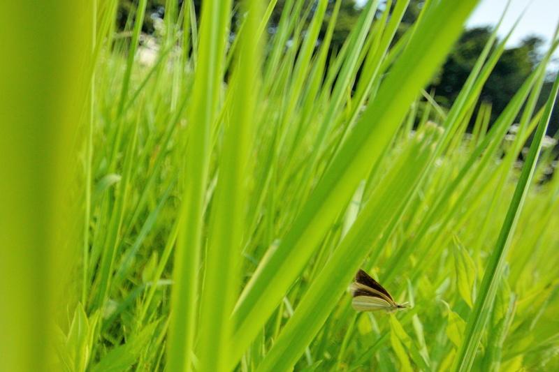 小畔川便り(セセリの飛翔:2014/7/15.16)_f0031682_14130881.jpg