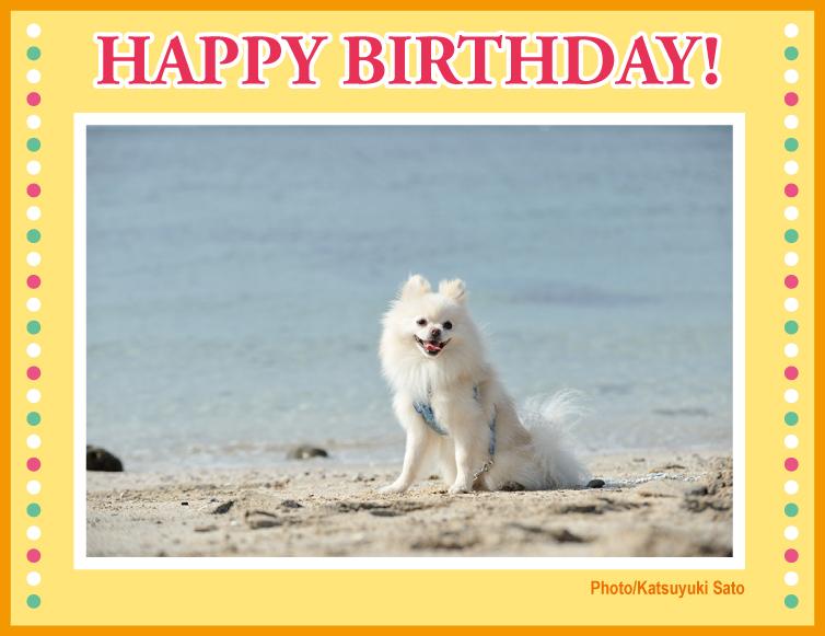 クレアちゃん、お誕生日おめでとう♪_d0102523_1215770.jpg