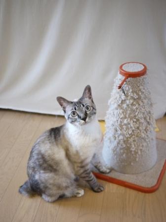 猫のお友だち カン太くんルノーちゃん編。_a0143140_17435343.jpg