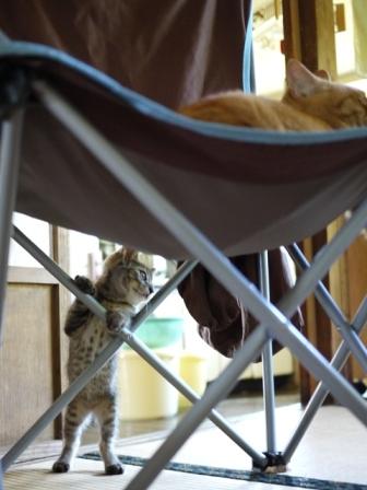 猫のお友だち ミミ子ちゃんソラ男くん編。_a0143140_23443716.jpg